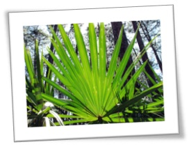 Prostate Supplements Saw Palm